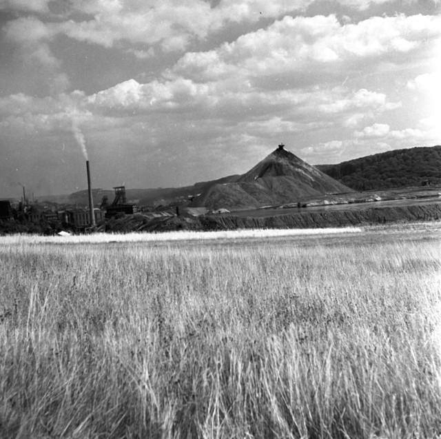 [SAAR Story] - [SAAR Landscape]