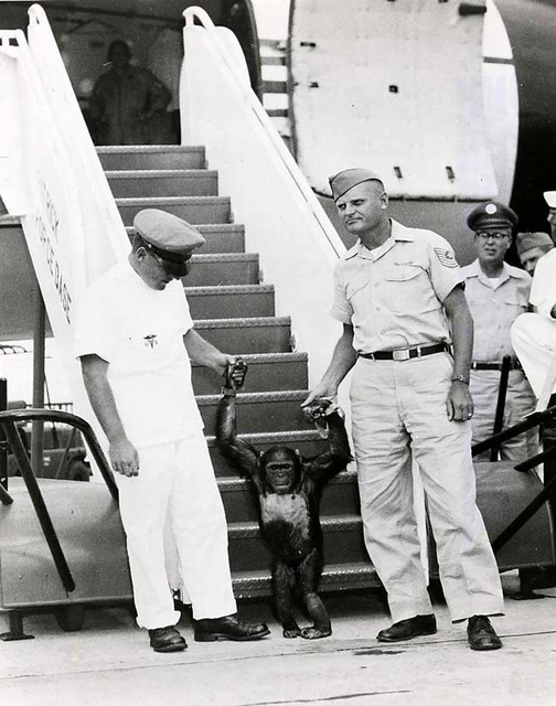 Military Personnel with Chimpanzee Used For Animal Flight Testing Program