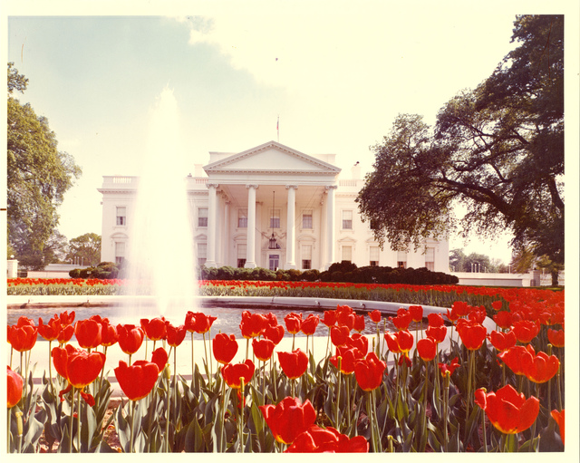 North and South Exterior of White House with Tulips and Fountains Visible