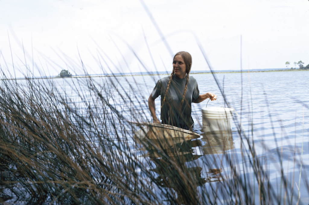 EPA Gulf Breeze Laboratory Biologist is Dip Netting for Contaminated Female Shrimp, this is for a Study of Whether PCB is Passed on to Their Offspring
