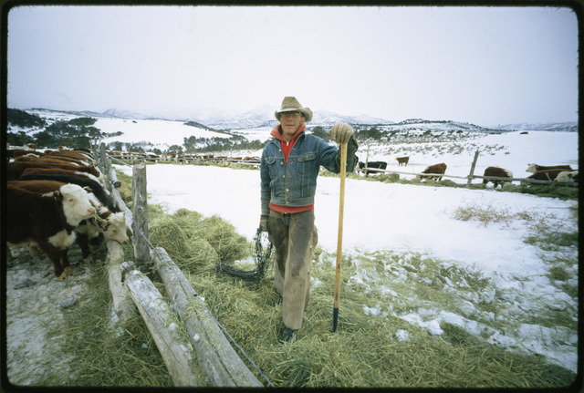 Frank Starbuck, Last of the Old Time Ranchers near Fairview Manages a Spread of 1300 Acres and 400 Head Of Cattle, He Does it Alone Because it is too Difficult and Expensive to Get Help