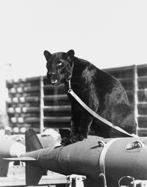 """The 13th Tactical Fighter Squadron, """"Panther Pack,"""" was deactivated on June 30, 1975. Eldridge, a black Asian panther, was the squadron's mascot from August 1971 to December 1973 when he joined the Phoenix, Arizona zoo"""