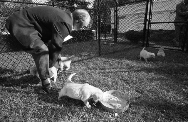 President Gerald R. Ford Visiting His Dog Liberty's Puppies in the White House Kennels