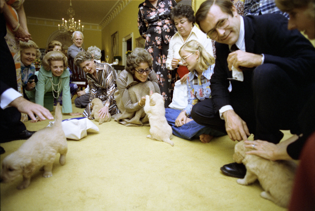 Susan Ford, Donald Rumsfeld, and Other Guests Playing with Puppies at an Anniversary Party for President Gerald R. Ford and First Lady Betty Ford