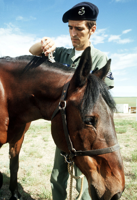 Sergeant Ronald Dowsham of the 5th Cavalry reoganized takes care of his mount after going off duty. Dowsham is an Air Policeman assigned to protect the missiles located here