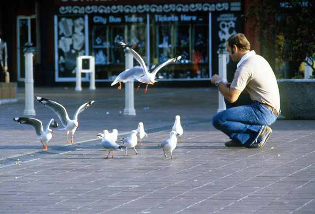 A member of Operation Deep Freeze '80 Team feeds birds in a square prior to departure to McMurdo Station, Antarctica