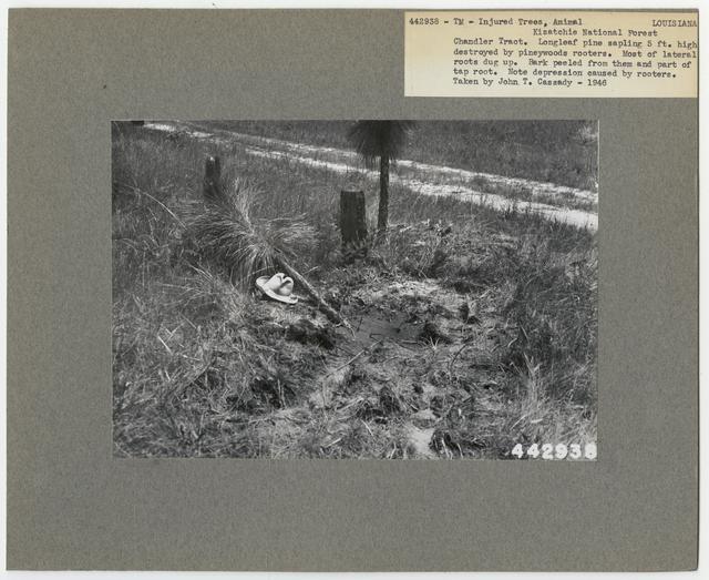 Animal Damage - Louisiana
