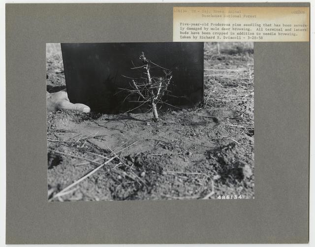 Animal Damage - Oregon