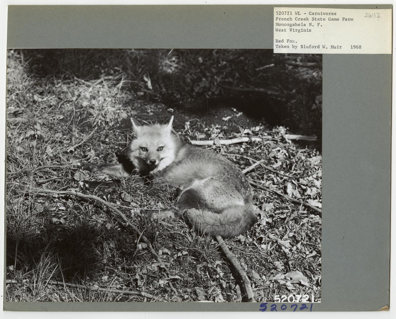 Animal: Fox - All States