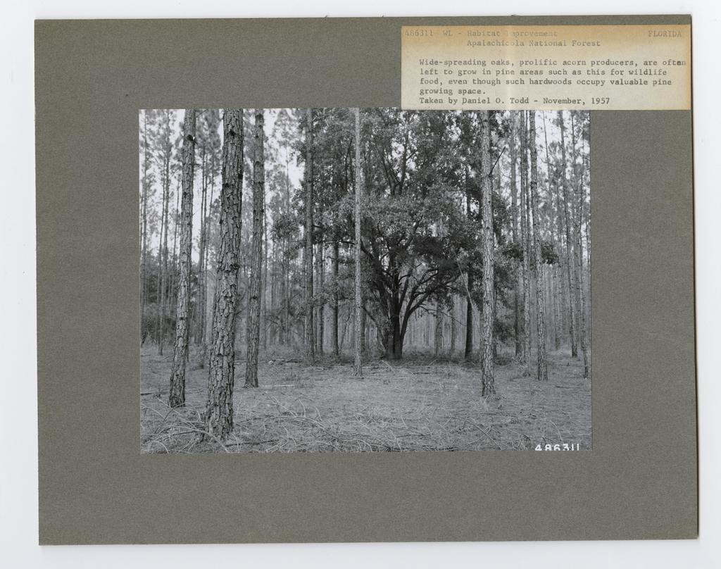 Animal Habitat Improvement - Florida