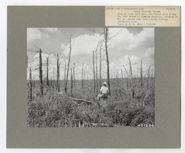 Burned -Over Areas - Florida