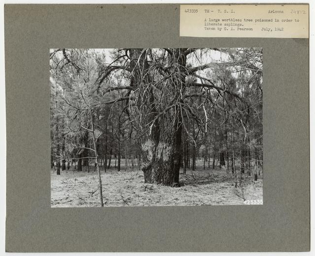 Bush/Cull Tree Removal - Arizona