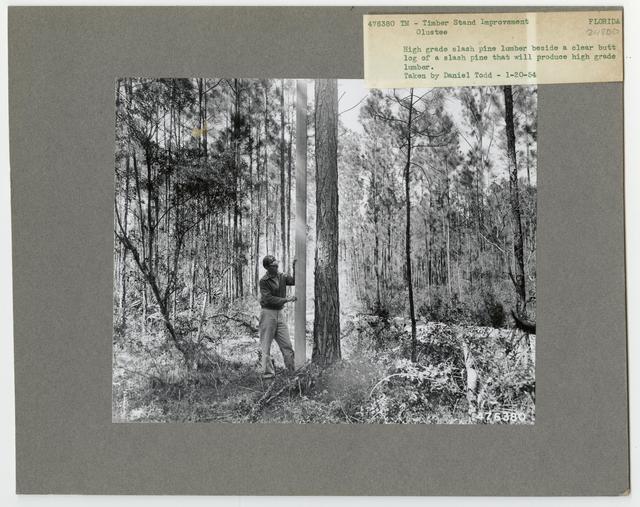 Bush/Cull Tree Removal - Florida