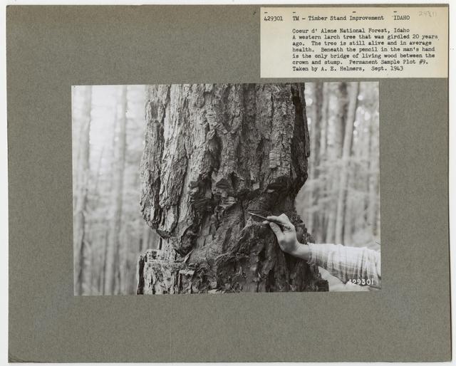 Bush/Cull Tree Removal - Idaho