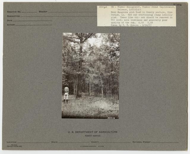 Bush/Cull Tree Removal - Louisiana