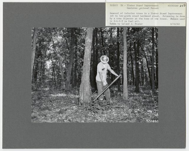 Bush/Cull Tree Removal - Michigan