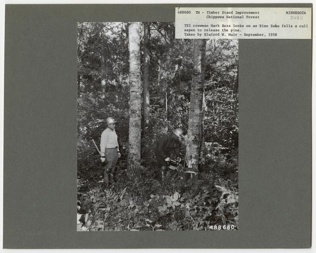 Bush/Cull Tree Removal - Minnesota