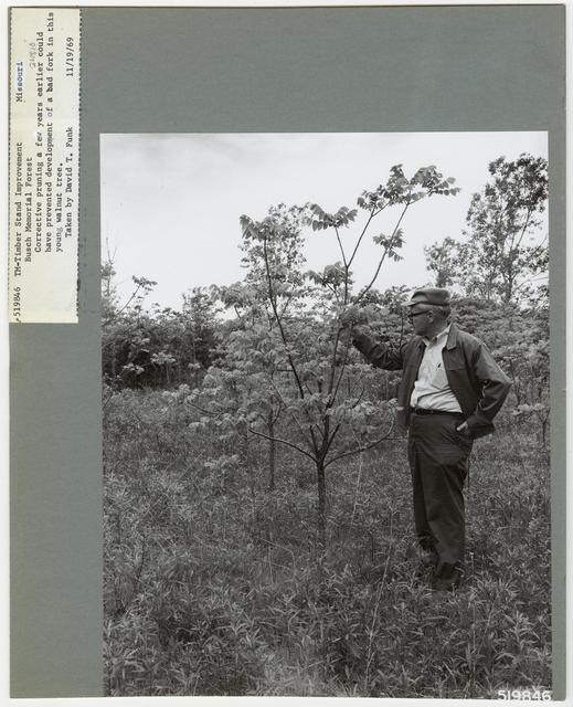 Bush/Cull Tree Removal - Missouri
