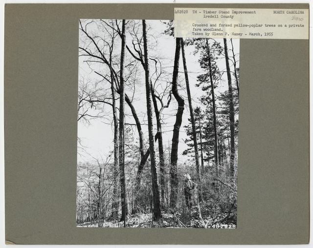 Bush/Cull Tree Removal - North Carolina