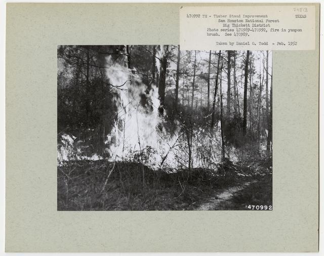 Bush/Cull Tree Removal - Texas