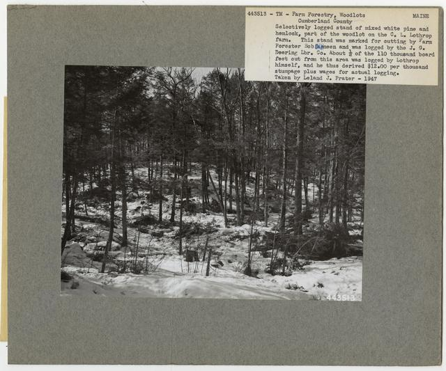 Community Forests - Maine