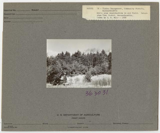 Community Forests - Massachusetts
