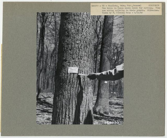 Community Forests - Wisconsin