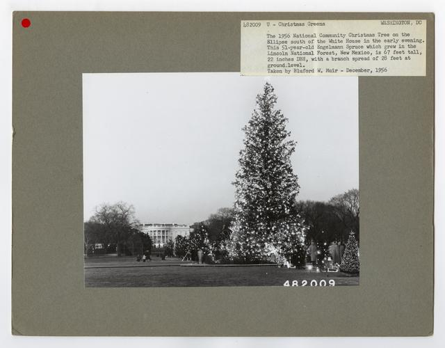 Crude Products: Christmas Greens - District of Columbia