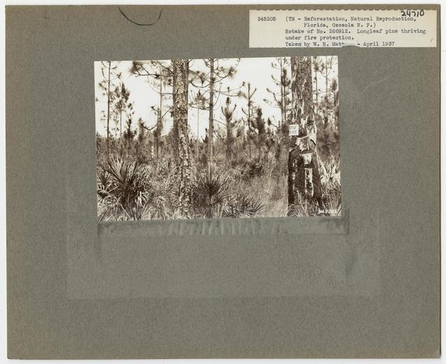 Cut -Over Areas (Repeat Series) - Florida