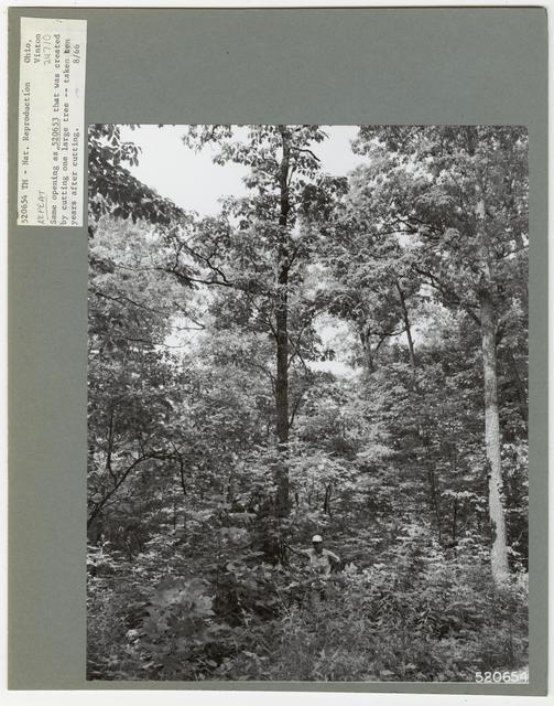 Cut -Over Areas (Repeat Series) - Ohio