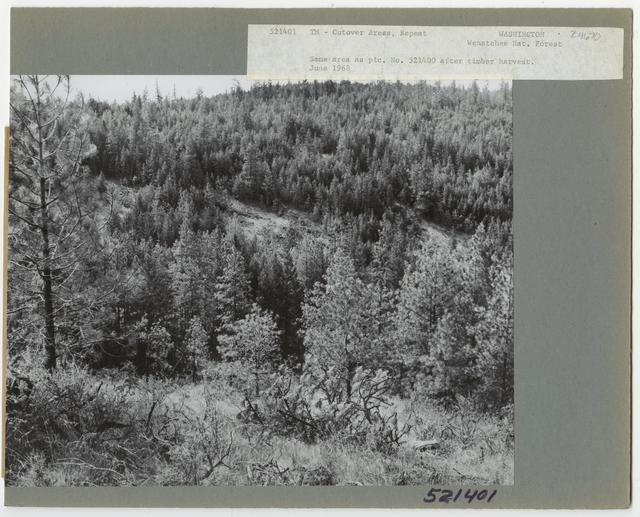 Cut -Over Areas (Repeat Series) - Washington