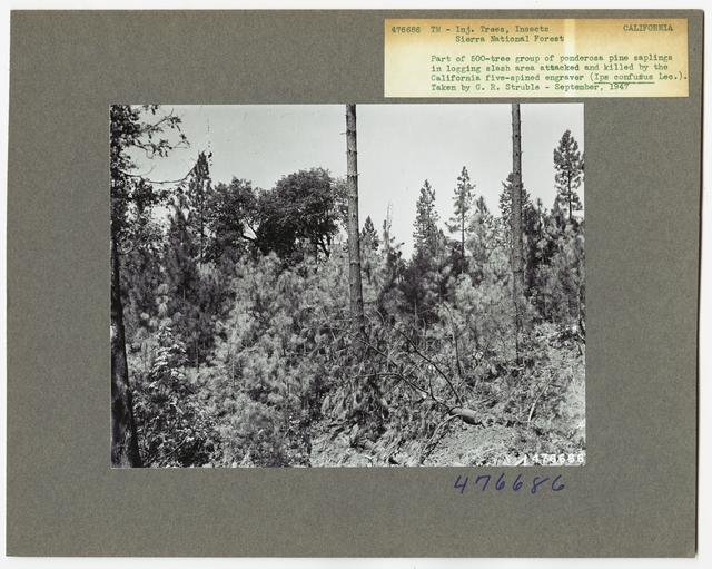 Damage and Loss to Tree Stands - California