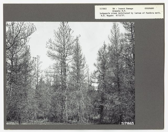 Damage and Loss to Tree Stands - Colorado