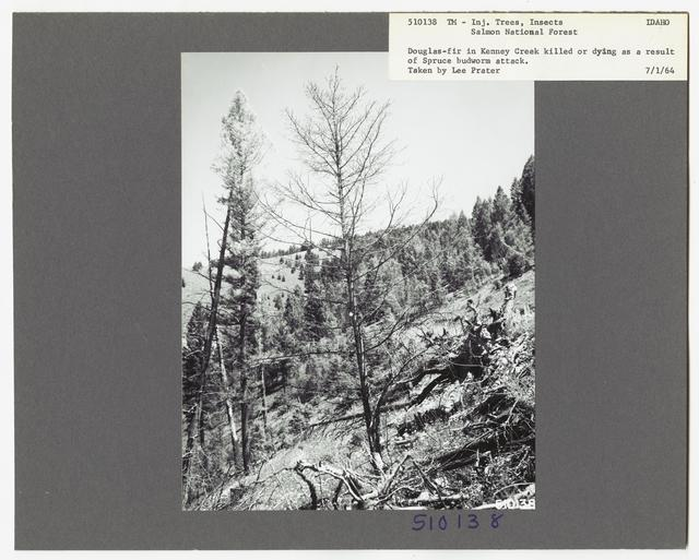 Damage and Loss to Tree Stands - Idaho