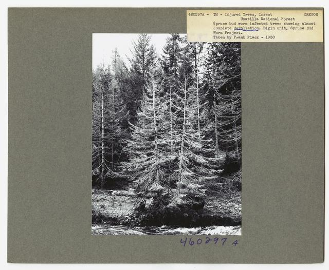 Damage and Loss to Tree Stands - Oregon