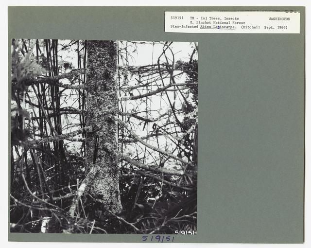 Damage and Loss to Tree Stands - Washington