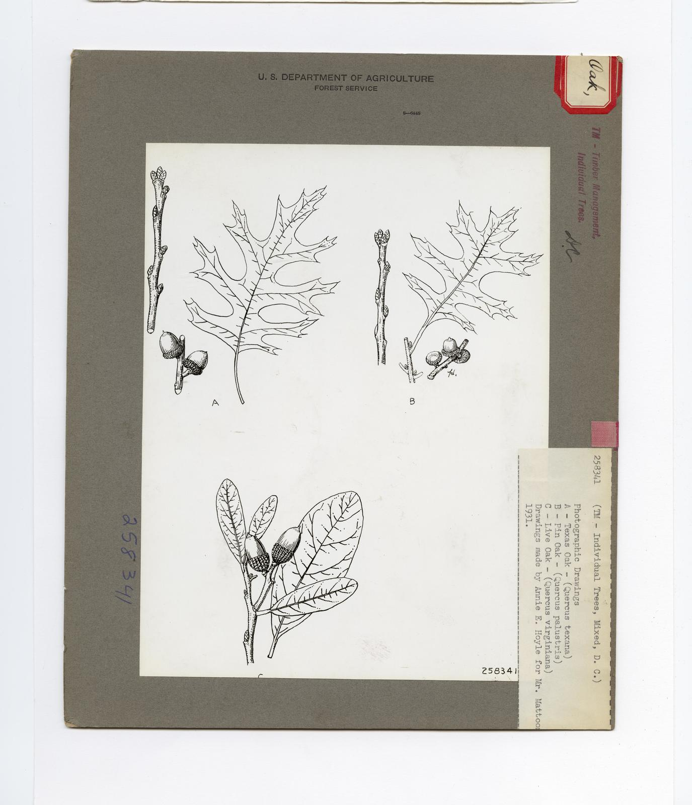 Drawings of Tree Parts - All States
