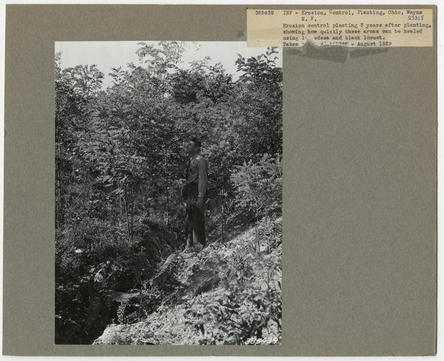 Erosion Control: Gully Plug - Ohio
