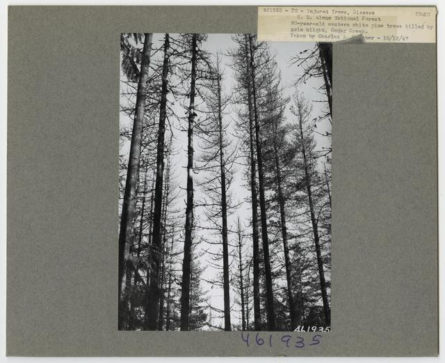 Forest Diseases - Idaho