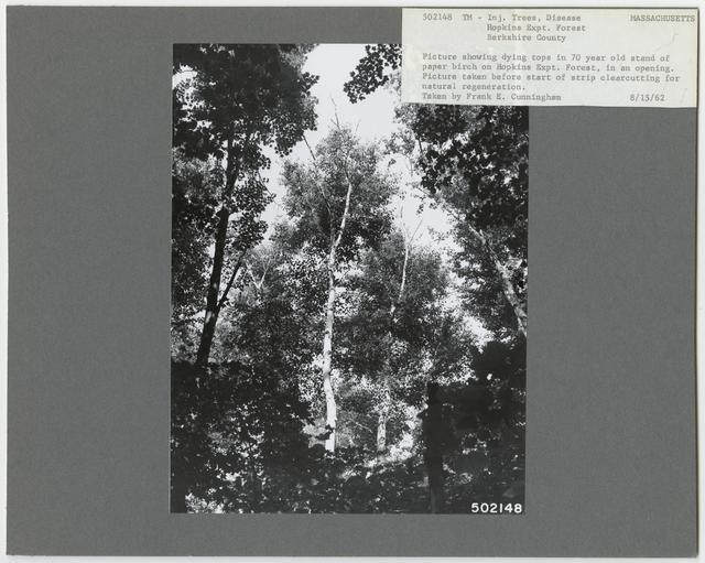 Forest Diseases - Massachusetts