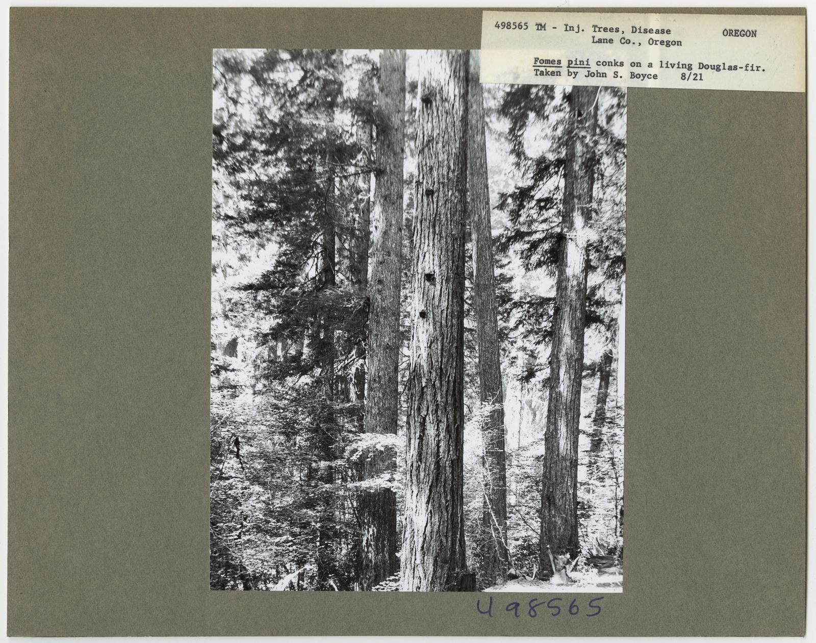 Forest Diseases - Oregon
