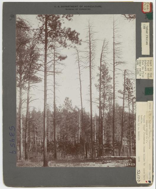 Forest Diseases - South Dakota