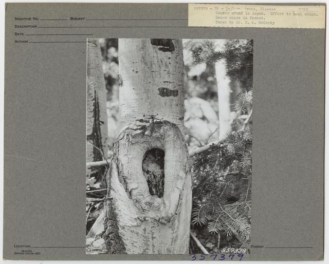 Forest Diseases - Utah