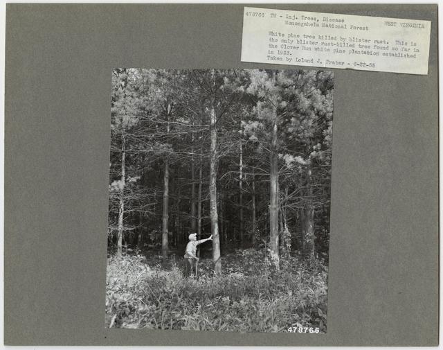 Forest Diseases - West Virginia