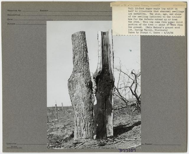 Forest Diseases - Wisconsin