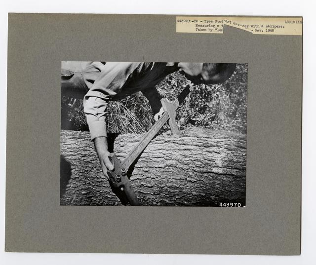 Forest Mensuration: Surveying/Studies - Louisiana