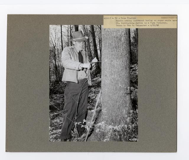 Forest Mensuration: Surveying/Studies - Massachusetts