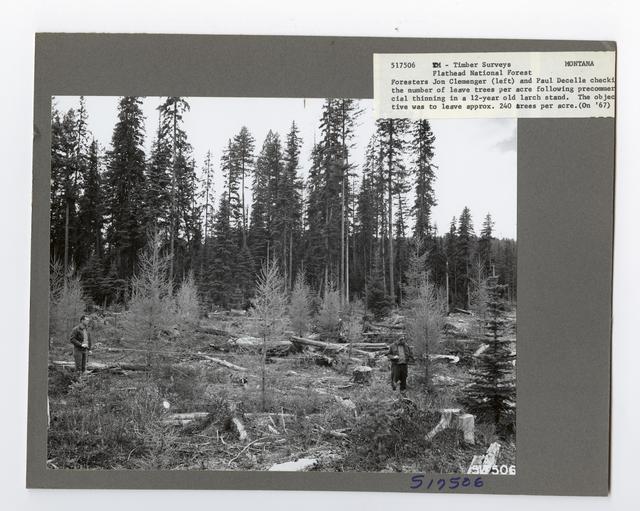 Forest Mensuration: Surveying/Studies - Montana