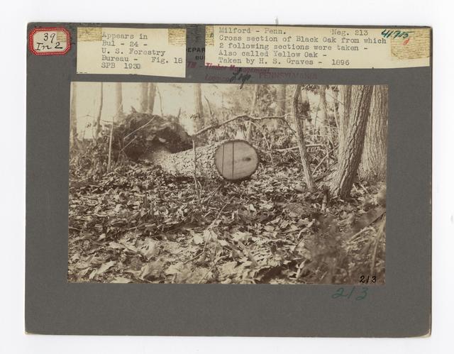 Forest Mensuration: Surveying/Studies - Pennsylvania