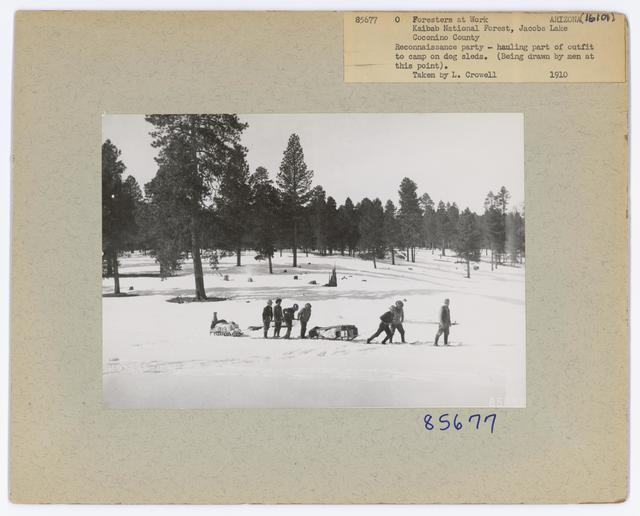Foresters at Work - Arizona